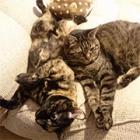 """猫たちのお留守番 一番の心配事は、飼い主の""""猫不足""""?"""