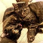 猫に「病院」「ごめんね」は通じない でも「好き」な気持ちは伝わってる?