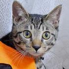 いたずら子猫「はっぴー」 初めてのハロウィーン