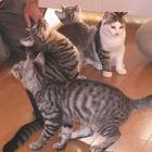 残りの人生を猫のために! がん再発後に自宅で保護猫カフェ