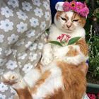 お庭が大好き! 人間なら100歳越えの猫、まこ