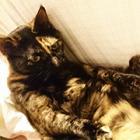「ニャオーン!」 自己主張する猫みたいに、生きてみたい!?