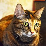 「室内飼いの猫は安心」は誤解、予防が必要