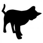 市役所の駐車場に猫の死体 おなかに傷 動物愛護法違反で捜査