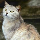 守ろうネコの命! かわいい「ねこともカレンダー」、販売中