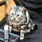 陣中見舞いに来てくれた猫 天才グミちゃんの厳しいチェック