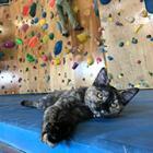 絶壁登りもお手のもの、ボルダリング猫「ララちゃん」