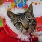 わんぱく猫「はっぴー」 初めてのハッピー・クリスマス