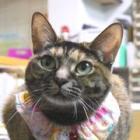 建築会社が保護猫シェルターに 職人たちも猫に癒される