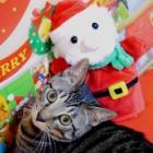 """愛猫の初めてのクリスマスで""""事故"""" 出てきた予想外のモノ"""