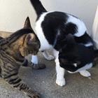 猫は集団を作らない! 同居する猫どうし、仲良くするには?