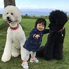 まるで童話! 大きな犬3匹と小さな女の子、かわいい写真集