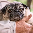 高齢者のペット飼育 動物の見極めと、もしもの時の準備が必要