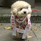 ペット連れ歓迎! 愛犬との初詣ができる神社、お祓いも