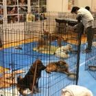 戌年にあらためて誓う 1頭でも多くの保護犬に幸せな未来を