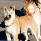 相次ぐ多頭飼育崩壊 犬20匹取り残され、高齢の飼い主は入院