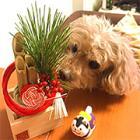 今年はワンコ年! 愛犬のお正月もワンワン仕様で大吉ゲット