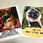 映画館でペット写真を募集中 イヌ・ネコ2本立て期間に展示