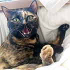 小さくてカワイイ、猫の前歯 観察できる飼い主の幸せ