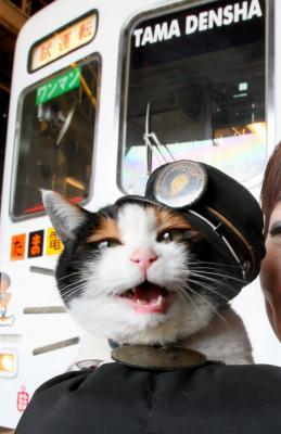 「たま電車」の前でニャーとないているのが和歌山電鉄の「たま駅長」=2009年、和歌山市