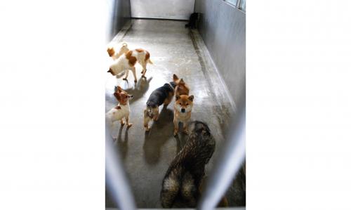 毎日一部屋分の犬が殺され、消えていく。そして空っぽになった部屋は、すぐに次の犬たちで満たされる