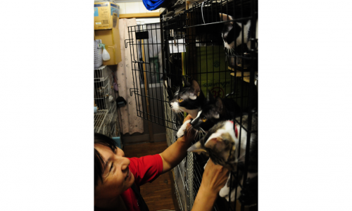 施設で飼う猫をなでる「ライフボート中部」の足立さつき代表。「健康に育て、飼い主に引き渡すのが私の役割です」=岐阜市