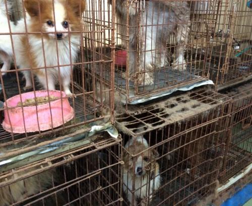 栃木県中部にある「犬の引き取り屋」の様子。施設を確認した獣医師は「鼻をつくような汚物のにおいが充満していた」。掃除の形跡は見られなかったという=2014年冬ごろ、動物愛護団体提供
