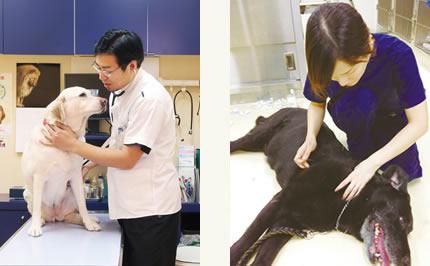 家族と病院とのコミュニケーションの重要性を説く東山獣医師。(左)(a)/高齢犬に鍼治療を施術する池田史織獣医師。(右)(b)