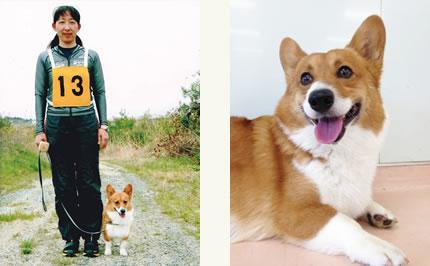 さんじは、 以前飼っていたコーギーのひ孫。(右)(b)/審査会に臨む高田さんとさんじ。(左)(c)