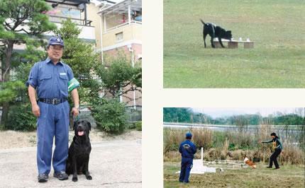 京都府警嘱託犬指導員の岡野さんとライム。(左)(e) 競技会で臭気選別試験を受けるライム。(右上)(f) 審査会で幅跳び試験を受ける、さんじ。(右下)(g)