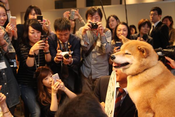 集まったファンに囲まれての撮影会。柴犬まるは動じることなく応じていた=東京都中央区、遠藤雄司撮影