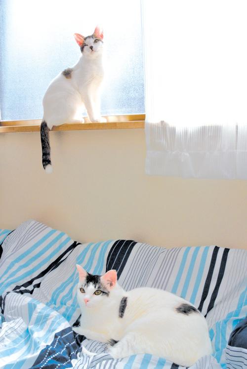 シェアハウスで、次の飼い主との出会いを待つ保護猫たち