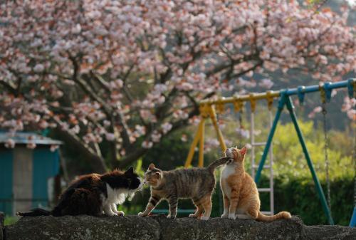 写真3)過疎化で人が来なくなった公園で猫だけが遊んでいた ©星野俊光