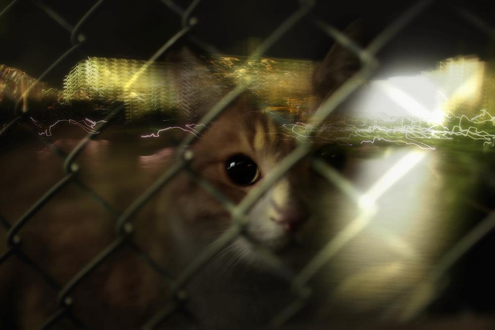写真展「海猫夢幻」のタイトル写真。この作品のみ合成 ©星野俊光