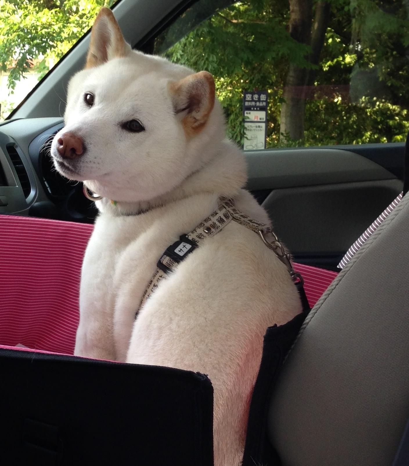 車の中でもくるり。呼んだ?