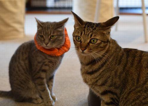 ねこかつの保護猫たち