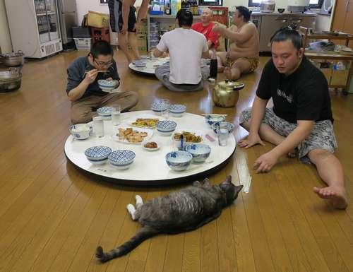 稽古後の食事中、力士に甘えるモル