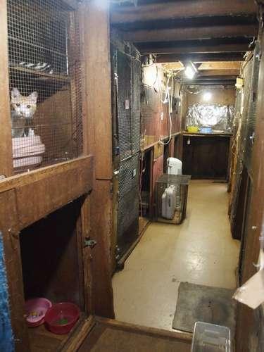 天井裏の空間を上下左右にベニヤ板などで間仕切り、いくつもの猫舎が作られていた=北九州市