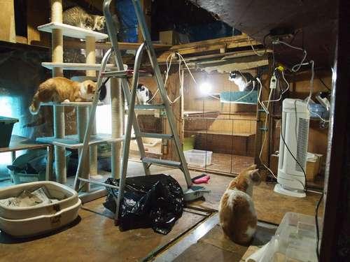 猫舎と猫舎の間の通路部分には、猫たちが放し飼い状態に。たこ足配線が見られ、漏電火災が心配になる=北九州市