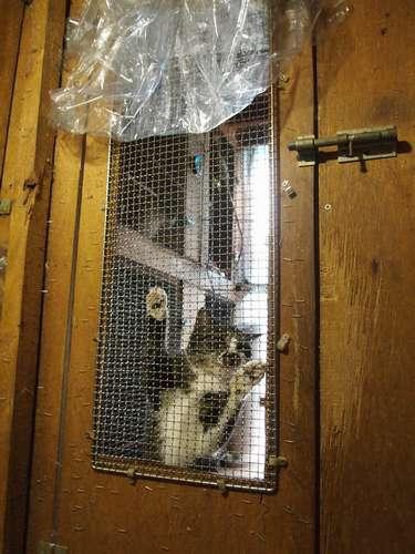金網に取りすがって泣き続ける猫。猫舎には外から鍵がかけられている=北九州市