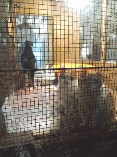 猫舎の中から、すがるようにこちらを見つめる猫たち=北九州市