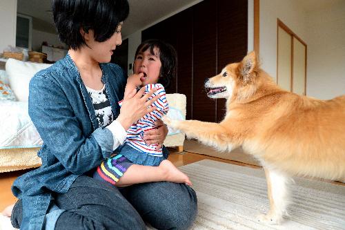 史帆ちゃんをあやす東さんに、キッチンタイマーの音を知らせに来た聴導犬アミ=4月24日、埼玉県所沢市、角野貴之撮影