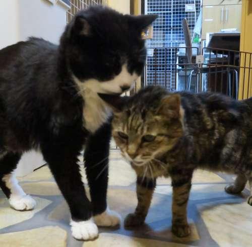 てっちゃん(左)とビーちゃん。仲良しの2匹=2016年5月、東京ペットホーム