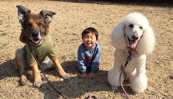 犬たちを「家族」として認識している我が息子