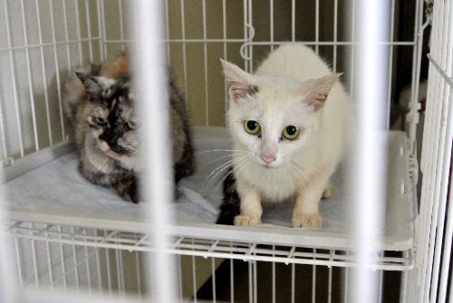 熊本県動物管理センターに収容され、新たな飼い主を待つ猫たち=3日、熊本市東区