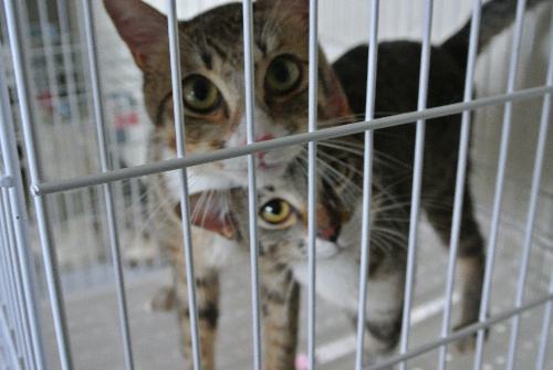 熊本県動物管理センターに収容され、新たな飼い主を待つ猫たち=7月3日、熊本市東区