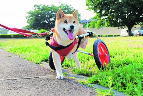 車いすはすみれちゃん応援団からの贈り物=写真/sora