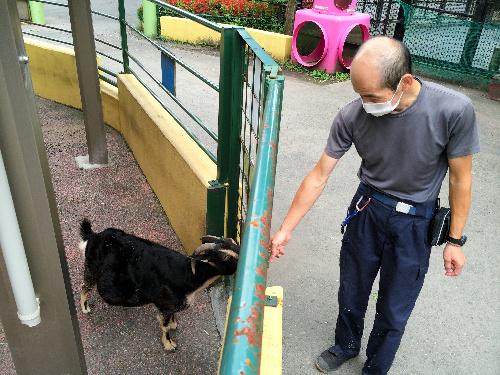 童話を元にした動物展示がいくつもある。「オオカミと7匹の子ヤギ」の囲いを前に、「エサをくれると思って寄ってくるんですよ」と田中さん