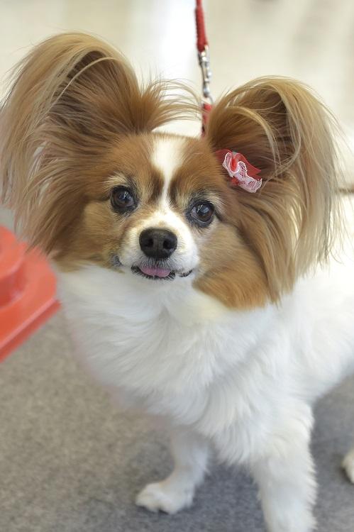 かわいいわんちゃんがたくさん来店。ワンポイントの耳飾りがおしゃれ!