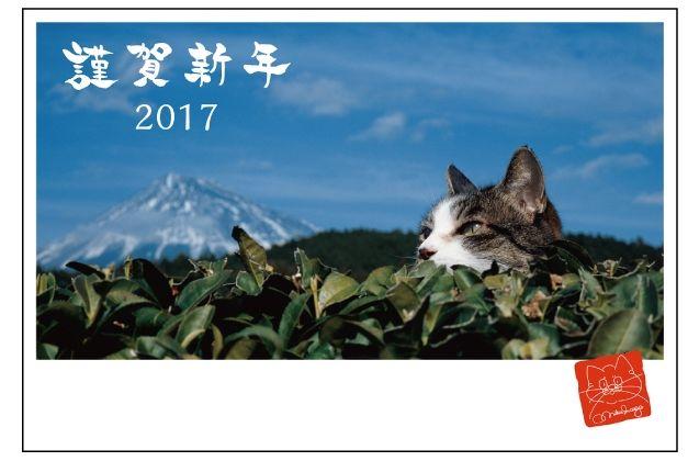 「岩合光昭のねこ お年玉付年賀はがき」(日本郵便)